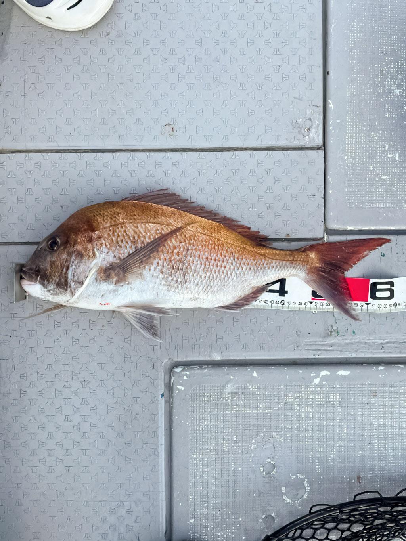 タイラバ 釣果|タイラバJET で 真鯛 GET!